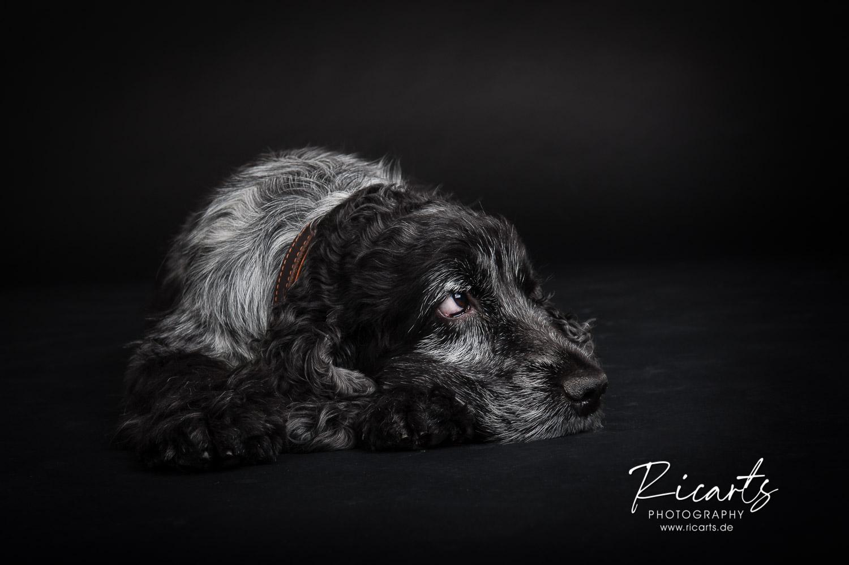 Foto Hund