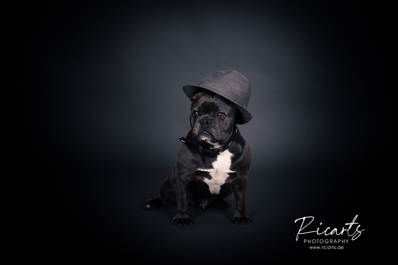 Foto Hund mit Hut